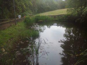 Hier das Bild von einem Teich im Erzgebirge