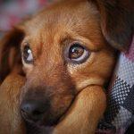 Was füttere ich beim Hund bei übersäuertem Magen?